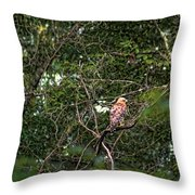 Hawk Drying Out Throw Pillow