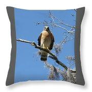 Hawk Eye Contact Throw Pillow