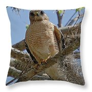 Hawk Gawk Throw Pillow