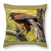 Hawk In A Tree Throw Pillow