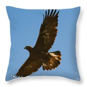 Hawk In Flight Throw Pillow
