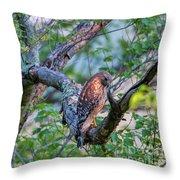 Hawk In Sunlight Throw Pillow