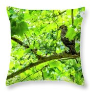 Hawk In Sycamore Throw Pillow