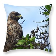 Hawk In The Tree Throw Pillow