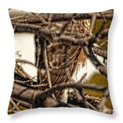 Hawk King Outside My Window Throw Pillow