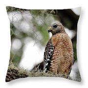 Hawk On Watch Throw Pillow