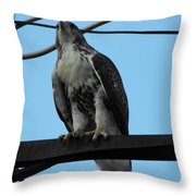 Hawk Urban Hunting Throw Pillow