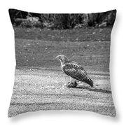 Hawk Vs Prey Throw Pillow