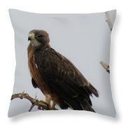 Hawking Good Time Throw Pillow