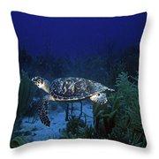 Hawksbill Sea Turtle 1 Throw Pillow