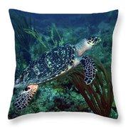 Hawksbill Sea Turtle 7 Throw Pillow