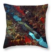 Hawksbill Sea Turtle 9 Throw Pillow