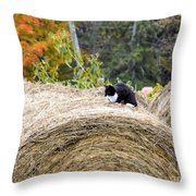 Hay Kitty Throw Pillow