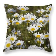 He Loves Me Daisies Throw Pillow