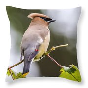 he Masked Bird Throw Pillow