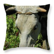 Head Of A Holstein Cow With Horns Throw Pillow