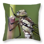 Head Of The Dragonfly Throw Pillow