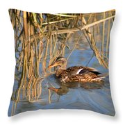 Heading For Cover 1 Throw Pillow