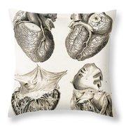 Heart, Anatomical Illustration, 1814 Throw Pillow