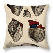 Heart, Anatomical Illustration, 1822 Throw Pillow