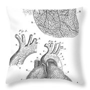 Heart Anatomy, Illustration, 1703 Throw Pillow