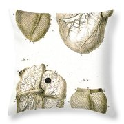 Heart And Muscle Fibers, 18th Century Throw Pillow