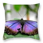 Heartstwings Throw Pillow