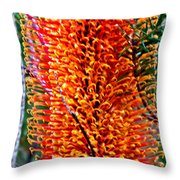 Heath Banksia From Fairfax Walk Throw Pillow