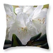 Heavenly Glimpse Throw Pillow