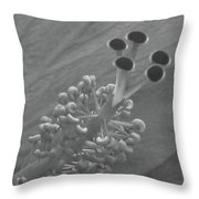 Heavenly Hibiscus Bw 11 Throw Pillow