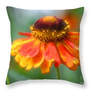 Heavenly Zinnia Throw Pillow