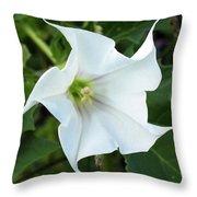 Hedgebind Throw Pillow