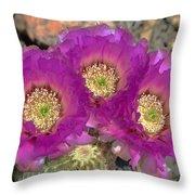 Hedgehog Cactus Triplets Throw Pillow