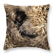 Hedgehog Curled Up Throw Pillow