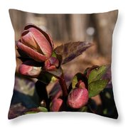 Heliborus Early Flower Buds 2 Throw Pillow