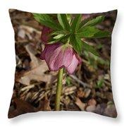 Heliborus Nodding Throw Pillow