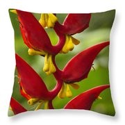 Heliconia Dielsiana Throw Pillow