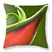 Heliconia Orthotricha Throw Pillow