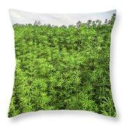 Hemp Plantation Throw Pillow