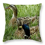 Hen Hen Drake At Frankenmuth On The Cass River Throw Pillow