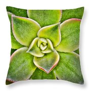 Hens And Chicks  Throw Pillow