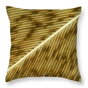 Hens Feather Throw Pillow