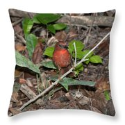 Hepatic Tanager At The Coba Ruins Throw Pillow