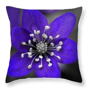 Hepatica 3 Throw Pillow