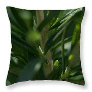 Herb #5 Throw Pillow