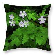 Herb Robert On The Ma At Throw Pillow