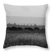 Herd Of Bison Grazing Panorama Bw Throw Pillow