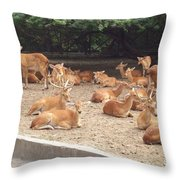 Herd Of Stags. Throw Pillow