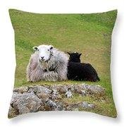 Herdwick Sheep On A Hillside In Cumbria Throw Pillow