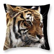 Here Kitty... Throw Pillow